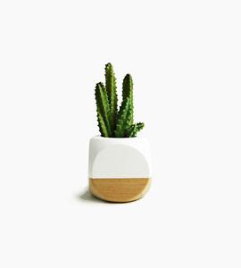 Sea   asters mini geometric planter   white